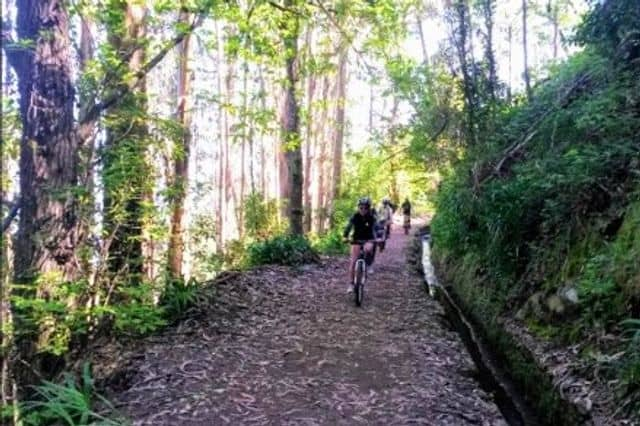 A Stag do enjoying the mountain-biking trails of Madeira Island